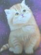 cat1br.jpg